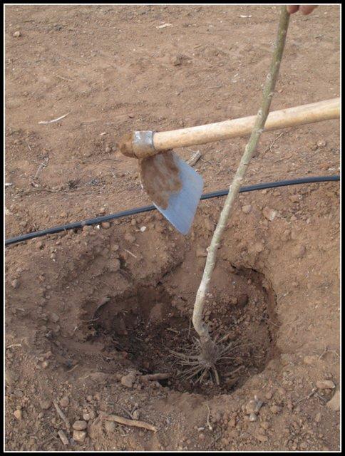 Preparación del hoyo