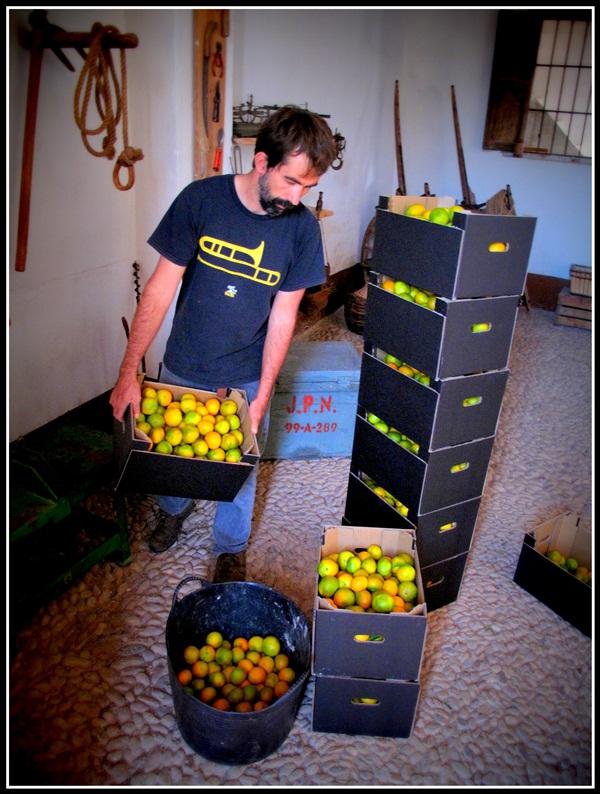 2014 10  pedido mandarinas