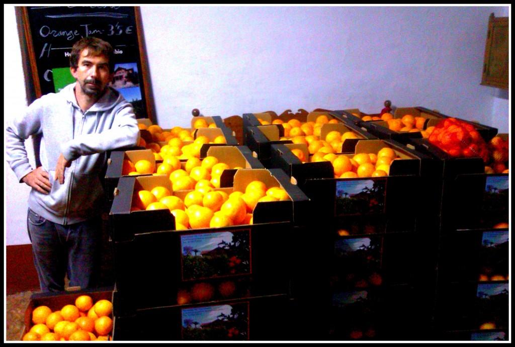 Naranjas Pamplona Huerto San Eusebio