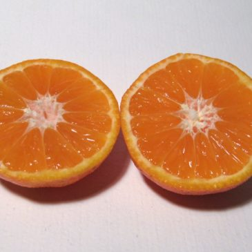 Caja de 10 kg de Mandarina Comuna ecológica