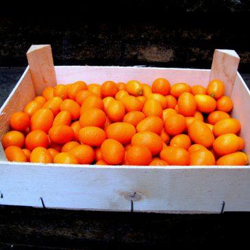 500gr kumquat