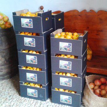 Inicio de la temporada de mandarinas!