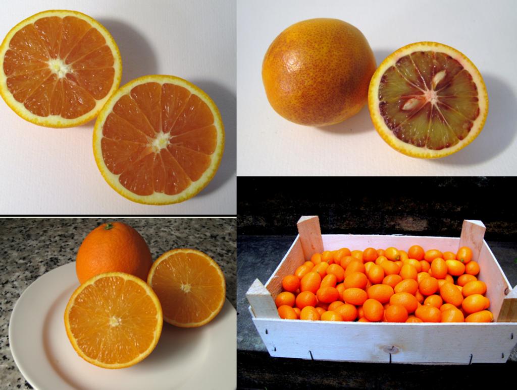citricos huerto san Eusebio
