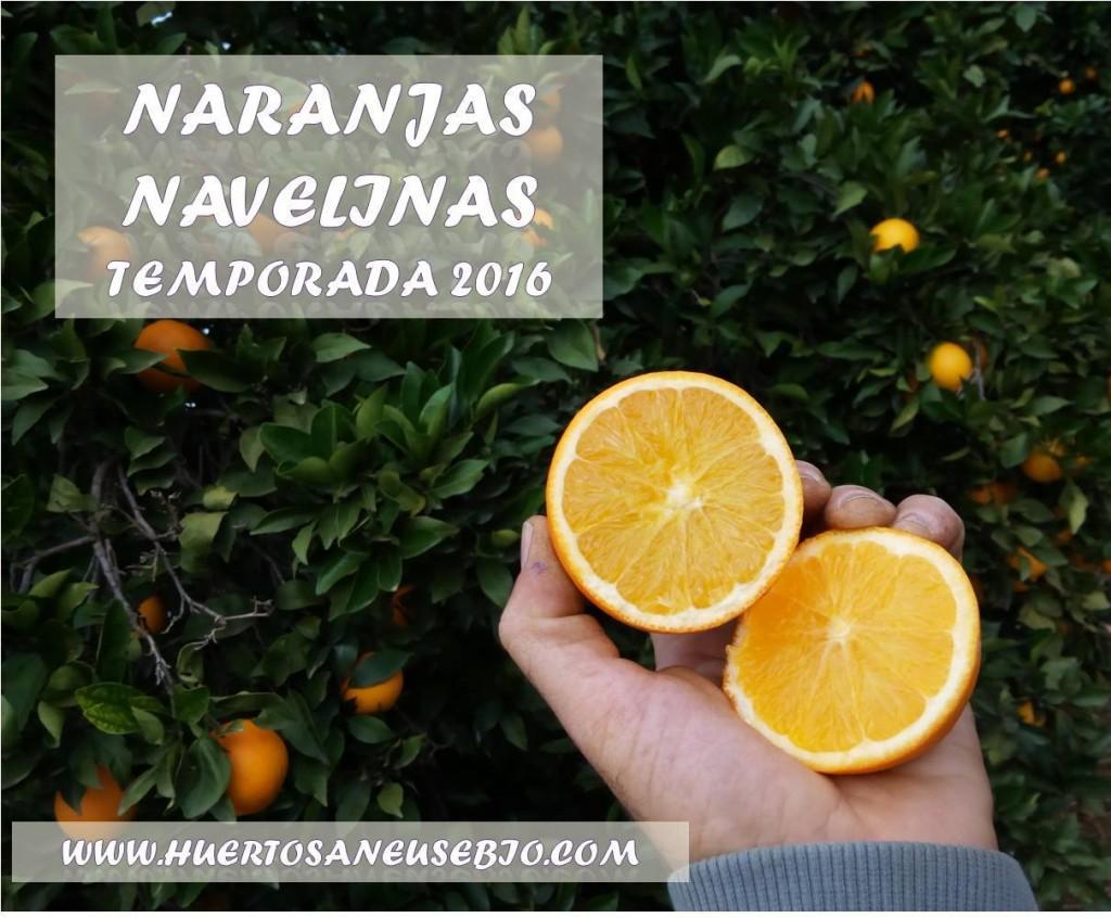 Naranjas navelinas 2016