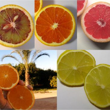 Caja combinada de 15 Kg de Naranjas variadas