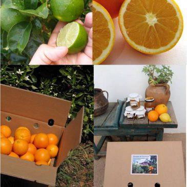 Pack Geschenk Bio Zitrusfrüchten, Honig und Marmeladen