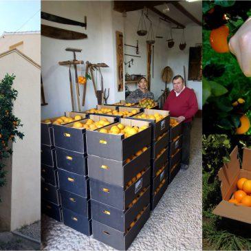 Inicio temporada de naranjas navelinas!