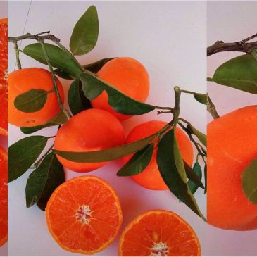 Mandarina Ellendale para estas semanas frías de febrero