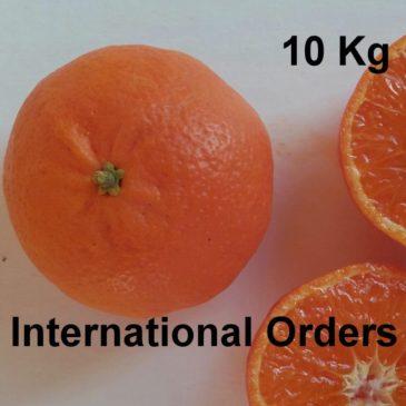 Mandarinas Ellendale 10 kg International orders