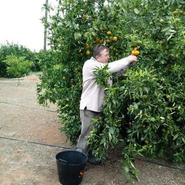 Empezamos la temporada de mandarinas del Huerto con novedades