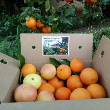 15 Kg Caja combinada naranjas y pomelos.