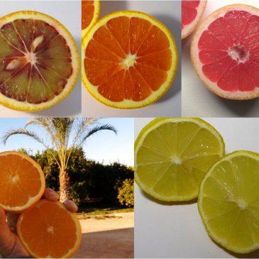 Cajas variadas de naranjas ecológicas
