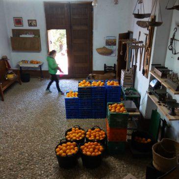 Naranjas ecológicas en febrero