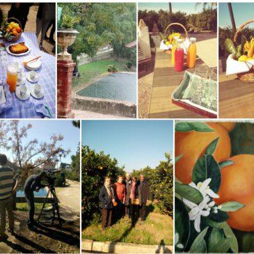 Fin de temporada de naranjas ecológicas 2019