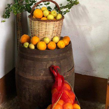 Inicio de la temporada de naranjas 2019-2020