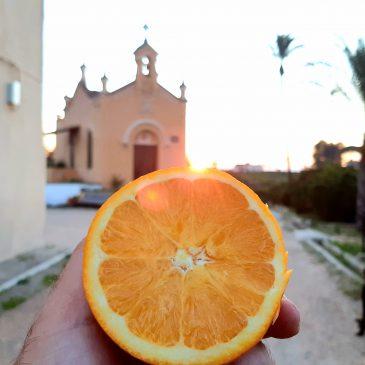Empezamos la temporada de naranjas ecológica Navelate