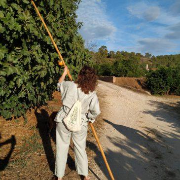 Visita al Huerto desde Gandia