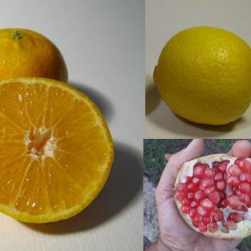 Empezamos la temporada de mandarinas, granadas y limones ecológicos