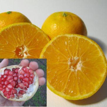 Caja combinada de mandarinas y granadas (10+5) 15 Kg